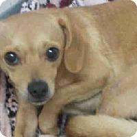 Adopt A Pet :: Eli - Gainesville, FL