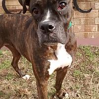Adopt A Pet :: Heaven - Austin, TX