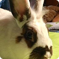 Adopt A Pet :: Herman - Moneta, VA