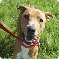 Adopt A Pet :: BRUNO - West Palm Beach, FL