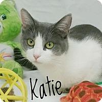 Adopt A Pet :: Katie - Kendallville, IN