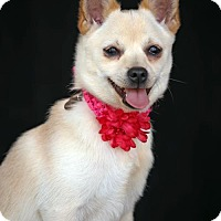 Adopt A Pet :: Chiquita - SAN PEDRO, CA