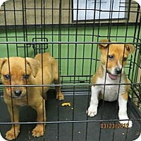 Adopt A Pet :: Allianor and Cednay Wilder - Southampton, PA