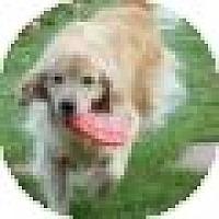 Adopt A Pet :: Marley - Denver, CO