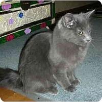 Adopt A Pet :: Nikita - Washington Terrace, UT