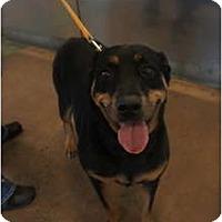 Adopt A Pet :: Soda - Toluca Lake, CA