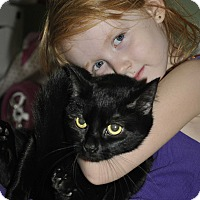 Adopt A Pet :: Sweets (Super sweet and loving - New Smyrna Beach, FL