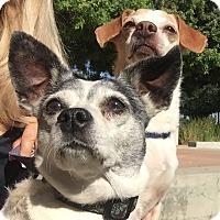 Adopt A Pet :: Angel - calimesa, CA