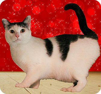 Domestic Shorthair Cat for adoption in McDonough, Georgia - Faith