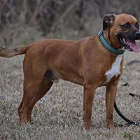 Adopt A Pet :: Cheech - Lebanon, MO