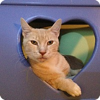 Adopt A Pet :: Clementine - Oyster Bay, NY