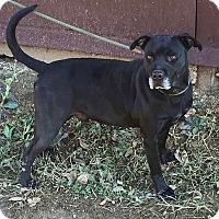 Adopt A Pet :: Bradley - Demopolis, AL