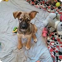 Adopt A Pet :: Geneva - Wyoming, MI