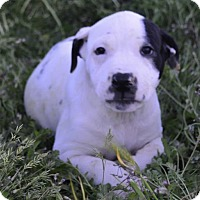Adopt A Pet :: Crayon: Charcoal - Corona, CA