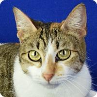 Adopt A Pet :: Electra - Carencro, LA