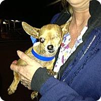 Adopt A Pet :: Carly - Poulsob, WA