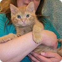 Adopt A Pet :: Apollo - Reston, VA