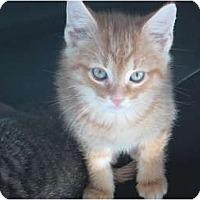 Adopt A Pet :: Jingle - Jeffersonville, IN