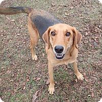 Adopt A Pet :: Ernesto - Ravenel, SC
