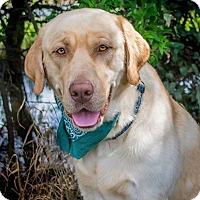 Adopt A Pet :: Mojo - Coppell, TX