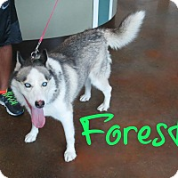 Adopt A Pet :: Forest - Scottsdale, AZ