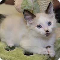 Adopt A Pet :: Princess Aurora - Davis, CA