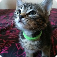 Adopt A Pet :: Caydence - Edmonton, AB
