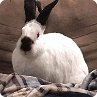 Adopt A Pet :: Livingston - Watauga, TX