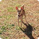 Adopt A Pet :: FiFi