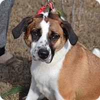 Adopt A Pet :: Kelsi Skittles - Acworth, GA