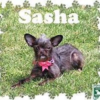 Adopt A Pet :: Sasha - Fallston, MD