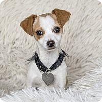 Adopt A Pet :: Minnie - McKenna, WA
