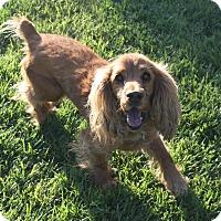 Adopt A Pet :: Donovan - Henderson, NV