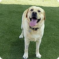 Adopt A Pet :: Ranger #2 and Landon - Buckeystown, MD