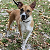 Adopt A Pet :: Jolene - Boca Raton, FL