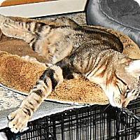 Adopt A Pet :: Mason - College Station, TX