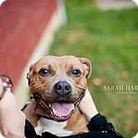 Adopt A Pet :: Lil' Lily - Reisterstown, MD