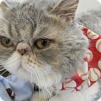 Adopt A Pet :: Huey - Beverly Hills, CA