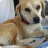 Adopt A Pet :: Tiffany - Alexandria, VA