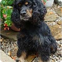 Adopt A Pet :: Codie - Sugarland, TX