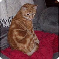 Adopt A Pet :: Snuggles - Summerville, SC