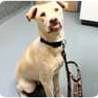 Adopt A Pet :: Glen - New Boston, NH