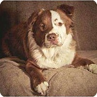 Adopt A Pet :: Riley *courtesy listing* - Rochester, NY