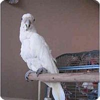 Adopt A Pet :: Tofu - Redlands, CA