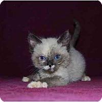 Adopt A Pet :: Evangeline - Modesto, CA