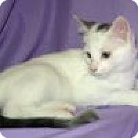 Adopt A Pet :: Karlton - Powell, OH