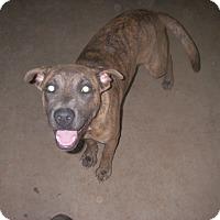Adopt A Pet :: Sweetie - Buchanan Dam, TX