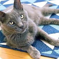 Adopt A Pet :: Franz - Chicago, IL