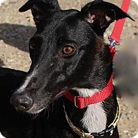 Adopt A Pet :: Dee Dee - Tucson, AZ