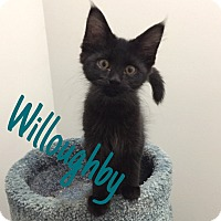 Adopt A Pet :: Willoughby - St. Louis, MO